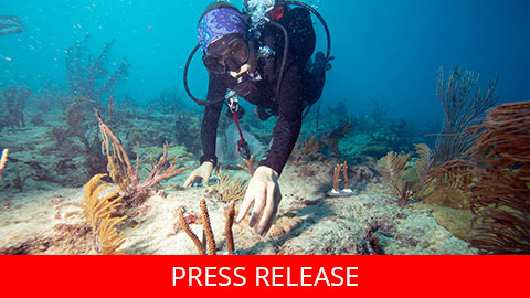 "<h2 dir=""ltr"">Canon Participates in the University of Miami's Coral Reef Restoration Project</h2>"